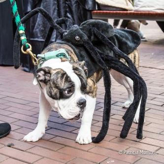 halloween-dog-parade-zoetermeer-patricia-munster-10