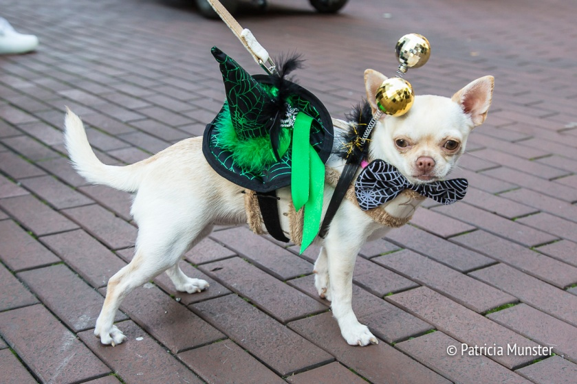 halloween-dog-parade-zoetermeer-patricia-munster-14