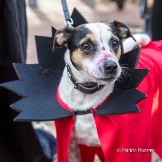 halloween-dog-parade-zoetermeer-patricia-munster-18