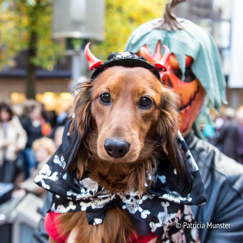 halloween-dog-parade-zoetermeer-patricia-munster-2