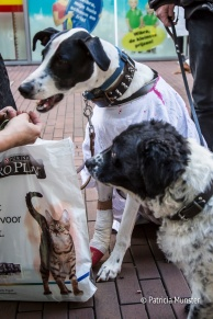halloween-dog-parade-zoetermeer-patricia-munster-26