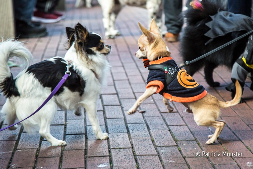 halloween-dog-parade-zoetermeer-patricia-munster-30