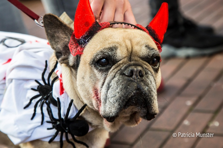 halloween-dog-parade-zoetermeer-patricia-munster-31