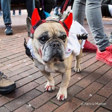 halloween-dog-parade-zoetermeer-patricia-munster-32