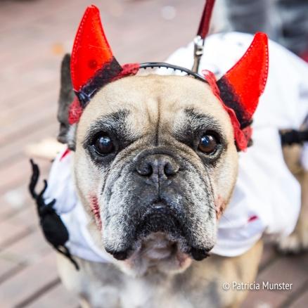 halloween-dog-parade-zoetermeer-patricia-munster-33