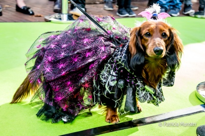 halloween-dog-parade-zoetermeer-patricia-munster-34