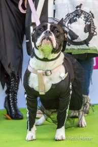 halloween-dog-parade-zoetermeer-patricia-munster-37
