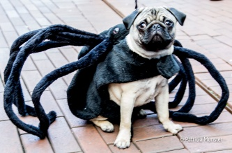 halloween-dog-parade-zoetermeer-patricia-munster-7