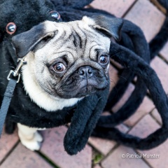 halloween-dog-parade-zoetermeer-patricia-munster-8