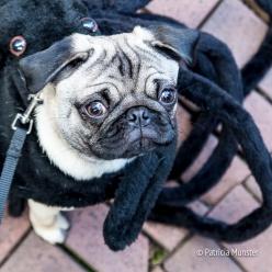 halloween-dog-parade-zoetermeer-patricia-munster-8