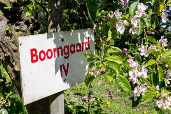 Bloemenfestival-2017-De-Olmenhorst-003