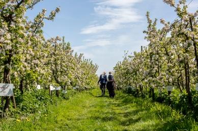 Bloemenfestival-2017-De-Olmenhorst-054