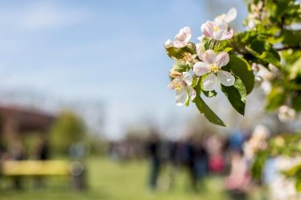 Bloemenfestival bij De Olmenhorst