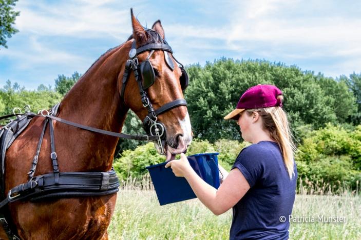 Ook paarden hebben dorst!