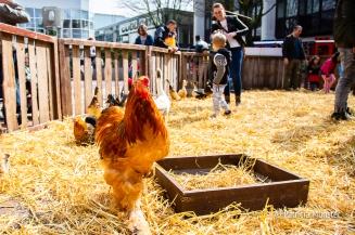 Spelen met boerderijdieren