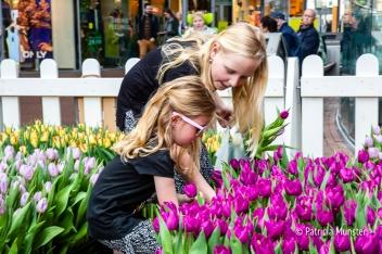 Tulpen plukken in het Stadshart