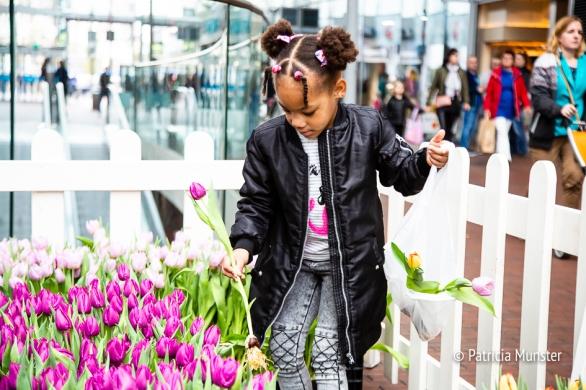 Tulpen plukken