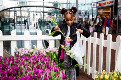 Tulpen in het Stadshart