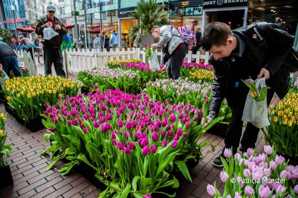 Tulpen plukken voor jong en oud