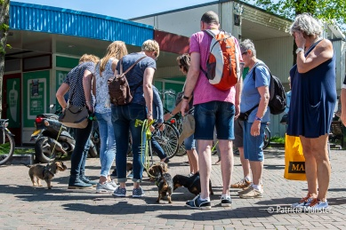 Teckel-dag-2018-Zoetermeer-Foto-Patricia_Munster-007