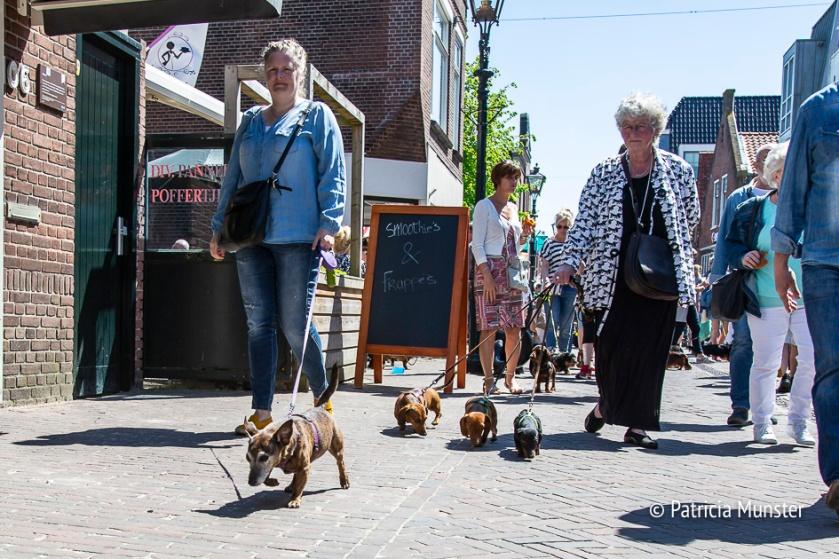 Teckel-dag-2018-Zoetermeer-Foto-Patricia_Munster-010