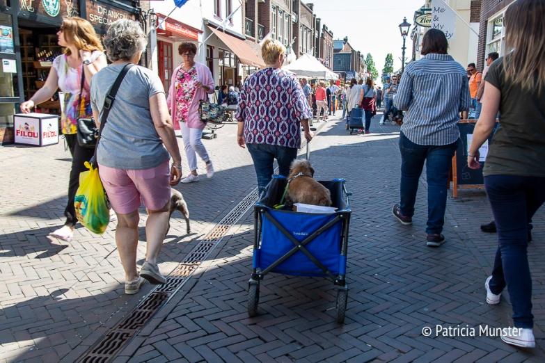 Teckel-dag-2018-Zoetermeer-Foto-Patricia_Munster-015