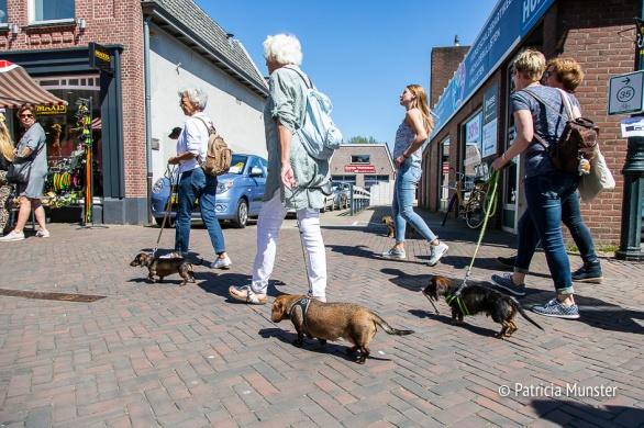 Teckel-dag-2018-Zoetermeer-Foto-Patricia_Munster-017