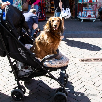Teckel-dag-2018-Zoetermeer-Foto-Patricia_Munster-023