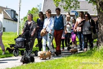 Teckel-dag-2018-Zoetermeer-Foto-Patricia_Munster-039