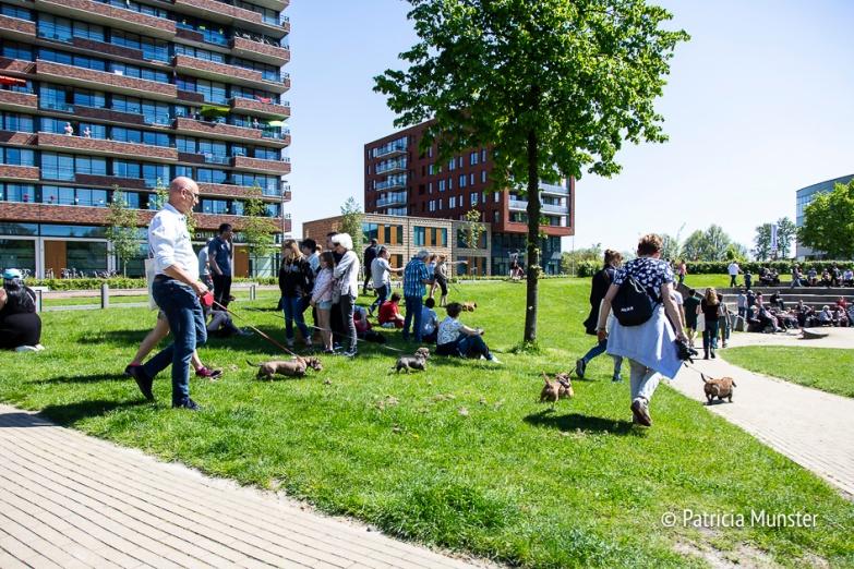 Teckel-dag-2018-Zoetermeer-Foto-Patricia_Munster-058