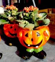 Halloween-Zoetermeer-pompoen